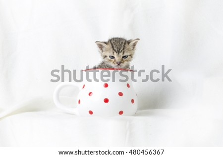 angry 4 weeks old kitten in a mug