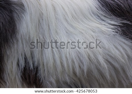 Animal hair. Combination of white, brown and black