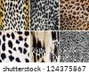 Animal pattern collage - stock photo