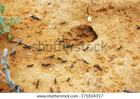 Anthill At Sands Stock Photo