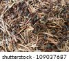 Ants building at their nest - stock photo