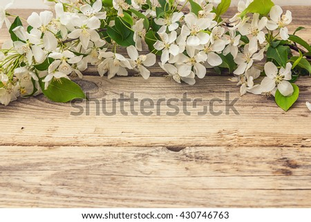 Apple blossom on wooden background. Copy space. Spring flowering branch.