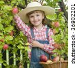 Apple harvests - stock photo