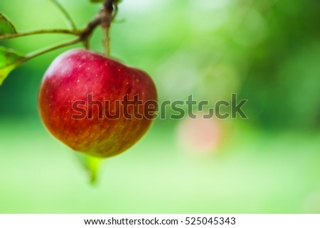 Apple. Red fruit on the branch of tree in the garden. Healthy, fresh organic natural food. Sweet, delicious, ripe vegetarian diet. Green freshness. Bright agriculture background.