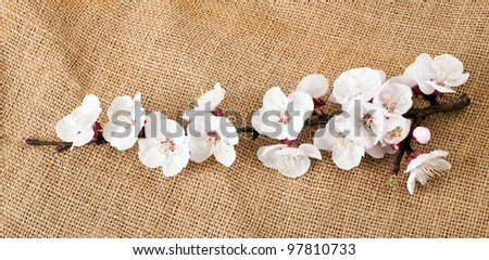 Apricot flowers on jute background
