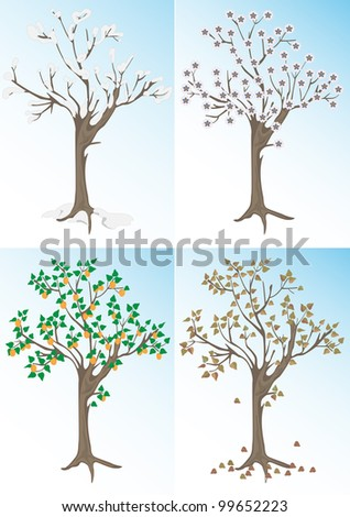 Apricot tree and the seasons