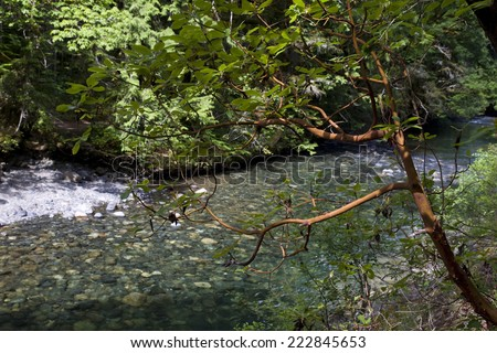Bald cypress trees growing 6 mile stock photo 555496294 shutterstock for Outdoor swimming pool near slough