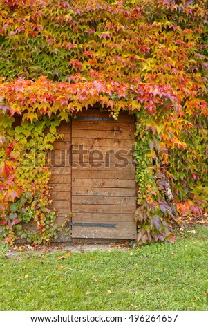 arch over the wooden door of the vine leaves of different colors. decorative grapes in autumn. colors of autumn.