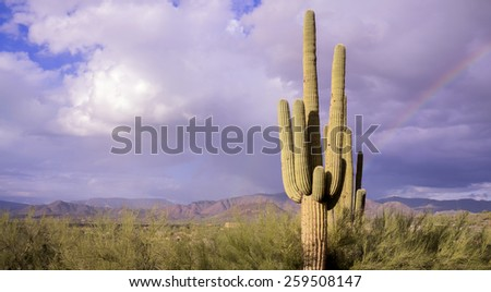 Arizona desert landscape, rainbow, Cavecreek,USA