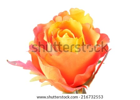 Artificial orange rose on white background