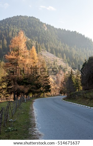 Asphalt road to sunny forest in the mountain