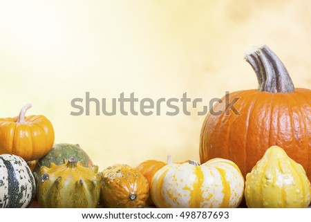 Assorted Pumpkins, Gourds and Squash on a Blurred Autumn Background