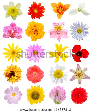 Assortment blooming in America