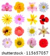 Assortment flowers in America - stock photo