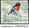 AUSTRALIA - CIRCA 1966: A stamp printed in Australia shows a Scarlet robin (Petroica boodang) bird, circa 1966. - stock photo