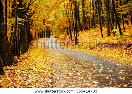 autumn alley. Sunlight breaks through the autumn leaves of trees.