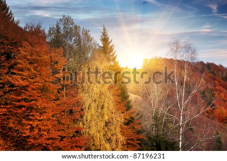 Autumn background with trees. Wood in mountains Carpathians, Ukraine