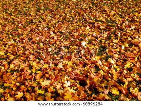 Autumn closeup picture