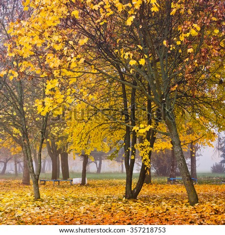 Autumn foggy morning in the park