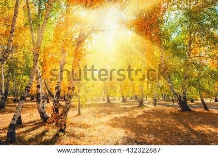 Autumn forest with yellow trees on a sunny day. Beautiful landscape