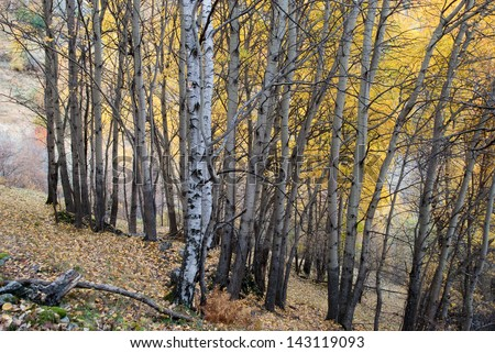 Autumn in a forest in the Pyrenees