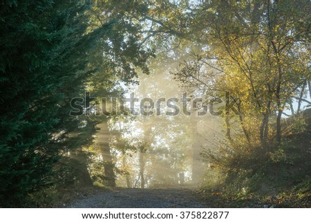 Autumn in Italian Umbria with colorful trees in morning fog with sun rays
