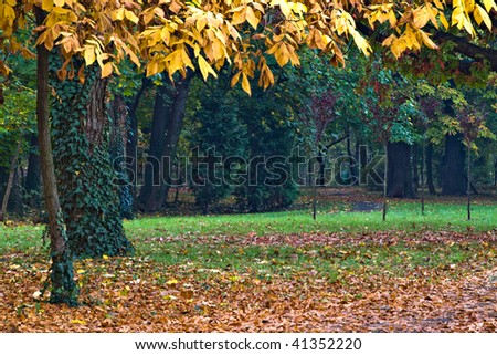 autumn in park with yellow and green leaves