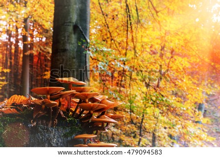 Autumn landscape with forest mushrooms. Nature background