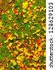Autumn leaf on green grass background. - stock photo
