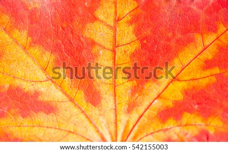 Autumn leave background