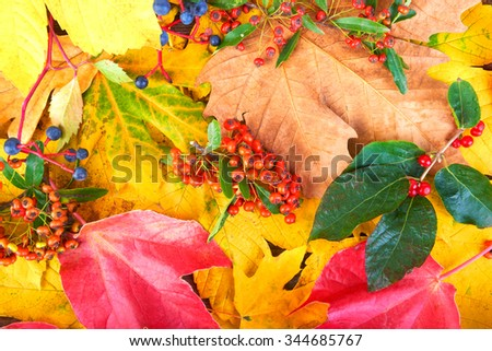 Autumn leaves background yellow and flowers on a wooden background