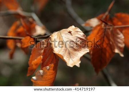 Autumn leaves in reviving spring forest