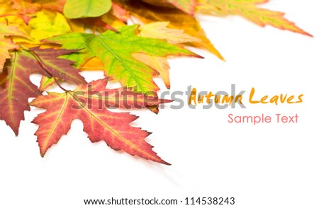 autumn leaves on a white background with copy space
