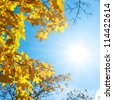 Autumn leaves under a sunny blue sky - stock photo