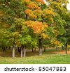 Autumn maple trees in the russian Park - stock photo