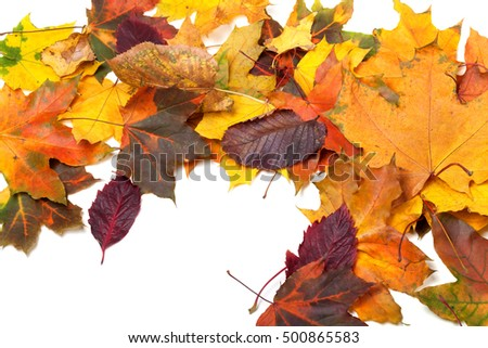 Autumn multicolor maple leaves background. View from above.