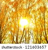 Autumn or summer design background  trees backdrop in the late colorful afternoon during sunset - stock photo