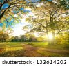 Autumn park natural landscape - stock photo