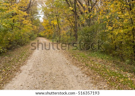 Autumn Road In Woods