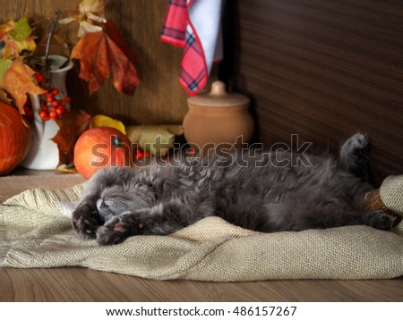 Autumn, sleepy mood. The kitchen, on the table sleeping sweetly fluffy, cute kitten. Pumpkins, a bouquet of maple leaves, cozy interior details