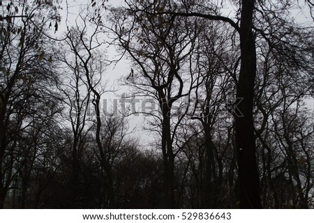 Autumn tree silhouettes in the forest