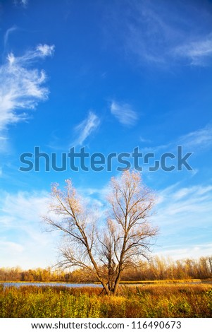 Autumn tree with falling leaves on the lake on the blue clear sky. Vertical orientation. Landscape