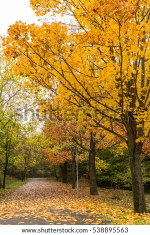 Collection Beautiful Colorful Autumn Leaves Green Stock ...