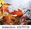 Autumn wet leaves over black - stock photo