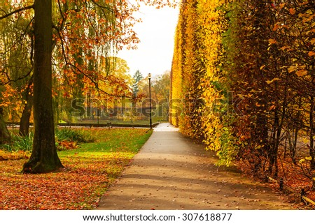 Autumnal alley in the park of Gdansk, Poland