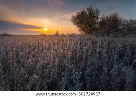 Autumnal early morning landscape. Field of dry grass, covered with hoarfrost.