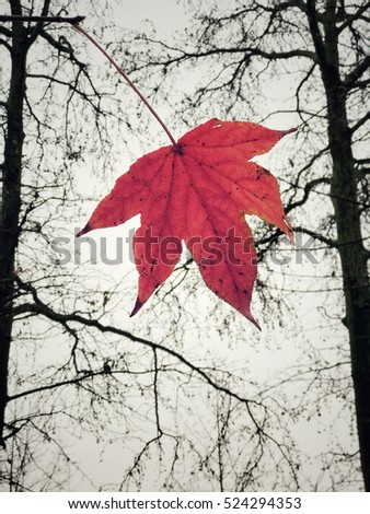 Autumnal leaf