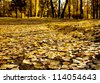 autumnal park - stock photo