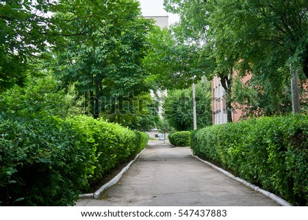 Avenue of trees in the city.