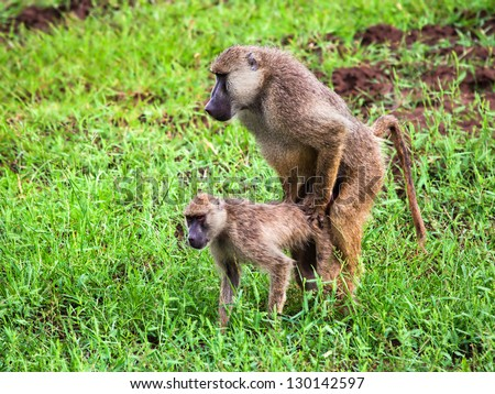 Animal sex Stock Photos, Images, & Pictures   Shutterstock